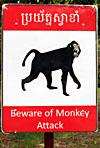 Beware og Monkey Attack
